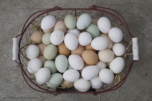 Eggs from many different chicken breeds all collected in a basket.
